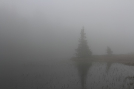 Another shot that I started to like once it was uploaded to my mac. Fog makes the nature tranquil.