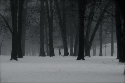 Walking in a foggy park