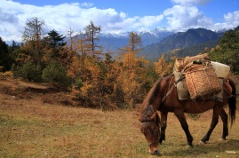 This horse carried some of our gear on our trek in Bhutan