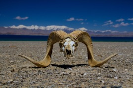 We found the skull as we walked back from the lake Karakul to the Pamir Highway